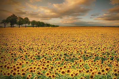 Sunflowers Print by Piotr Krol (bax)