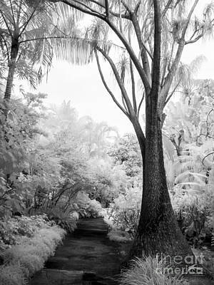 Trees Photograph - Black And White Infrared Of Sunken Gardens Path 1 by Jim Swallow