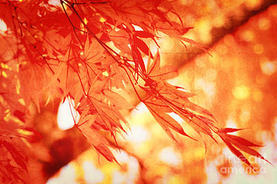Sunlight Behind Vintage Autumn Leaves Print by Beverly Claire Kaiya