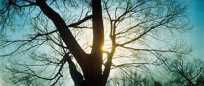 Sunlight Shining Through A Bare Tree Print by Panoramic Images