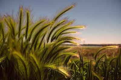 Photograph - Sunlight by Tony Boyajian