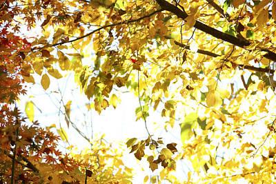 Sunlit Leaves Print by Les Cunliffe