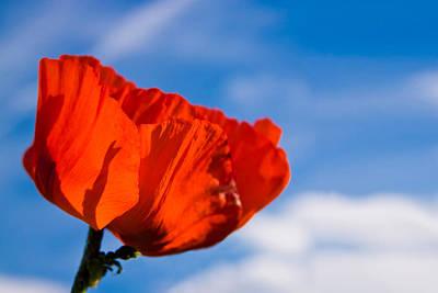 Red Photograph - Sunlit Poppy by Adam Romanowicz