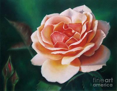 Color Pencil Drawing - Sunlit Rose by Ranjini Venkatachari
