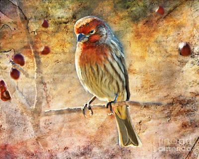 Finch Digital Art - Sunning by Betty LaRue