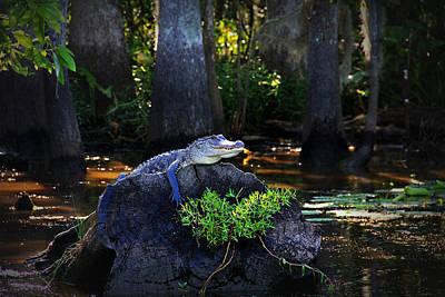 Alligator Bayou Photograph - Sunning In The Louisiana Swamp by Mountain Dreams