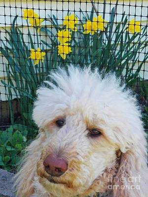 Sunny And The Daffodils Print by Judy Via-Wolff