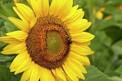 Sunny Bee Print by Christi Kraft