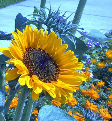 Sunburst Floral Still Life Photograph - Sunny Blue by Arlene Carmel