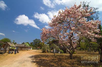 Cassia Blossoms Photograph - Sunny Day by Panai Thanacharoenyada