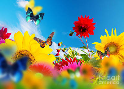 Sunflower Photograph - Sunny Garden Of Flowers And Butterflies by Michal Bednarek