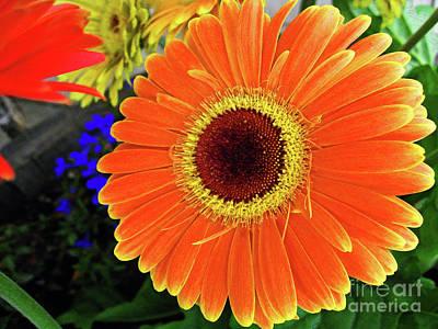 Mango Digital Art - Sunny by Molly McPherson