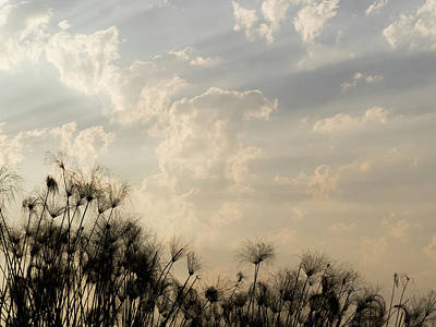 Matting Photograph - Sunrays Above Papyrus Plants, Okavango by Panoramic Images