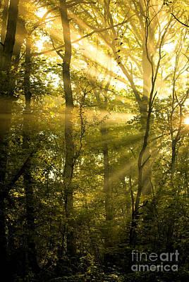 Sun Rays Digital Art - Sunrays Through The Trees by Natalie Kinnear