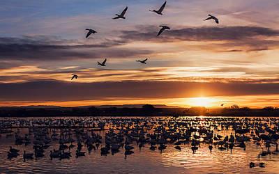 Sunrise - Snow Geese - Birds Print by Shara Lee