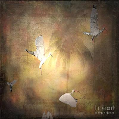 Ibis Mixed Media - Sunrise Flight by Irma BACKELANT GALLERIES