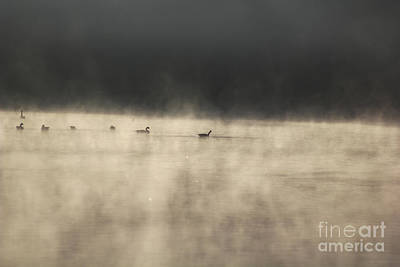 Duo Tone Photograph - Sunrise Geese by Melissa Petrey