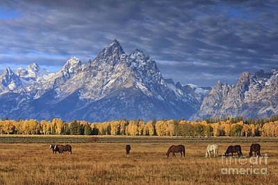 Sight Photograph - Sunrise Grazing by Mark Kiver