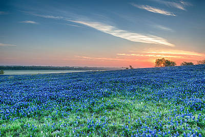Flowers Photograph - Bluebonnets Sunrise In Texas Spring Flowers And Texas Wildflowers Landscape by Tod and Cynthia Grubbs