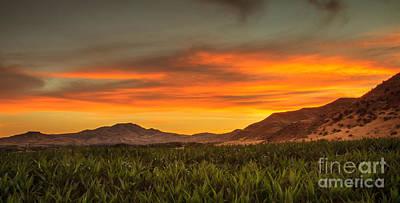 Sunrise Over A Corn Field Print by Robert Bales