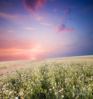 Sunrise Over Flower Land Print by Michal Bednarek