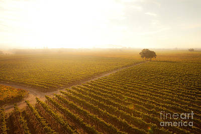 Vines Photograph - Sunrise Over The Vineyard by Diane Diederich