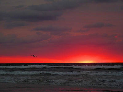 Sunrise Pink Print by JC Findley