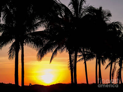 Tropical Photograph - Sunrise Through The Palms by Zina Stromberg