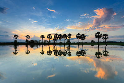 sunrise with silhouettes of palm trees or Borassus flabellifer on the rice field Vietnam. Original by Son Tong Tran