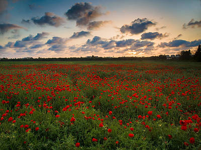 Landscape Photograph - Sunset And Poppies by Meir Ezrachi