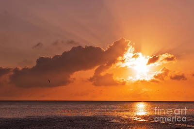 Flying Seagull Photograph - Sunset by Angela Doelling AD DESIGN Photo and PhotoArt