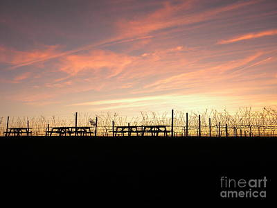 Sunset At The Vineyard Print by Jaclyn Hughes Fine Art
