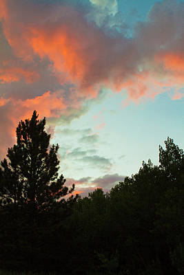 Sunset Behind Mountain Pine Trees Print by Piperanne Worcester