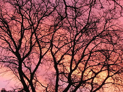 Sunset Behind The Trees Print by Debra Madonna