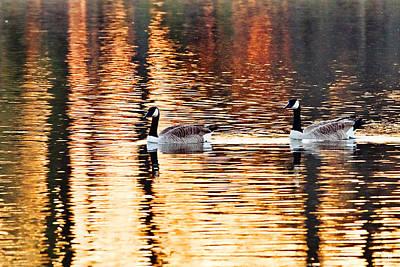 South Louisiana Photograph - Sunset Cruise by Scott Pellegrin