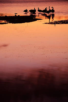 Goose Photograph - Sunset Discourse- Gorton Pond Warwick Rhode Island by Lourry Legarde