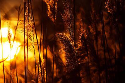 Chesapeake Bay Photograph - Sunset Fire by Benjamin DeHaven