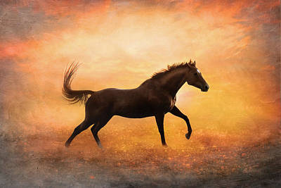 Photograph - Sunset Gallop by Pamela Hagedoorn