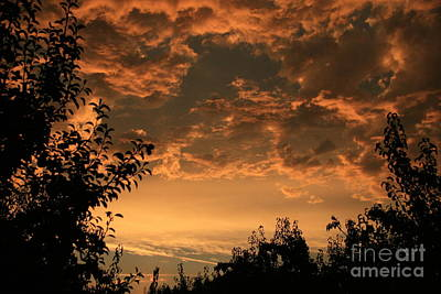 Sunset In The Orchard Print by Cari Gesch