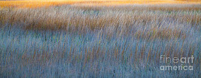 Sunset Marsh In Blue And Gold Print by Jo Ann Tomaselli