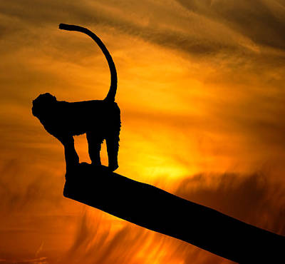 Striking Photograph - Monkey / Sunset by Martin Newman