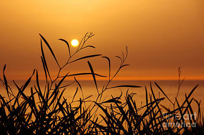Sunset On Leaves  Print by Carlos Caetano