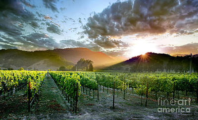 Glass Photograph - Wine Country by Jon Neidert