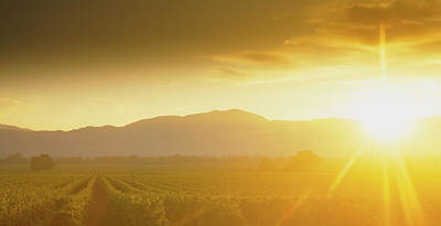 Vineyard In Napa Photograph - Sunset Over Vineyard, Napa Valley by Panoramic Images