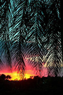Palm Fronds Photograph - Sunset Palms by Laura Fasulo