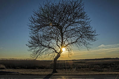Sunset Photograph - Sunset Tree by Donna Doherty