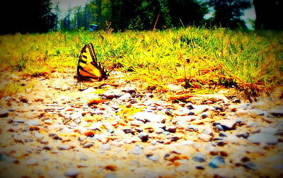 Photograph - Sunshine Butterfly by Alicia Forton