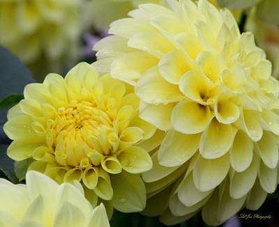 Flower Express Photograph - Sunshine Express by Jeanette C Landstrom