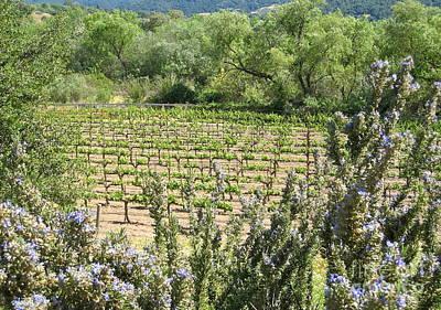 Central Coast Winery Photograph - Sunstone Vineyard  by Maureen J Haldeman