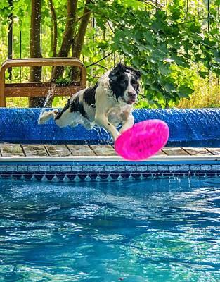 Water Play Photograph - Super Dog 2 by Steve Harrington
